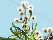 Himmel und Blumen Lizenzfreie Stockfotos