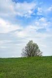 Himmel und Gras Stockfoto