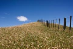 Himmel und Gras Lizenzfreies Stockfoto