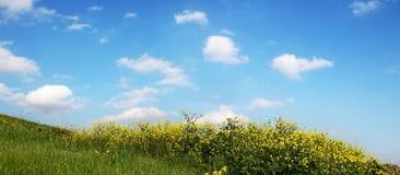 Himmel und Gras - breite Ansicht lizenzfreie stockbilder