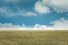 Himmel- und Grashintergrund, neue Grünfelder unter dem blauen Himmel im Herbst Stockbild