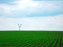 Himmel und grünes Feld Stockbild