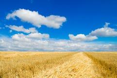 Himmel und landwirtschaftliches Stockfotografie