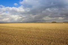 Himmel- und Strohstoppel Stockfotos