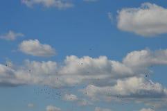 Himmel und viele Vögel stockbilder