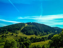 Himmel und Wald Lizenzfreie Stockfotografie
