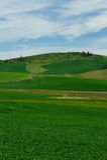 Himmel- und Weizenfeld lizenzfreie stockbilder