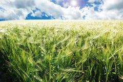 Himmel- und Weizenfelder Lizenzfreies Stockfoto