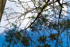 Himmel und Wolken getrennt durch Niederlassungen von Bäumen stockfotografie