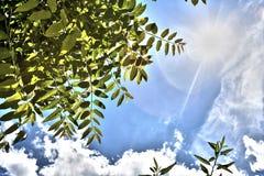 Himmel witth Sonne Stockfotos