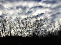 Himmel, Wolken, Bäume und Winter Stockfoto