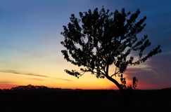 Himmel, Wolken und Baum des Sonnenaufgangs morgens stockfoto
