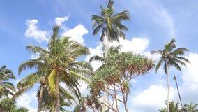 Himmelansicht von Palmen im hellen Wind und in den Wolken, die vorbei überschreiten stock video footage