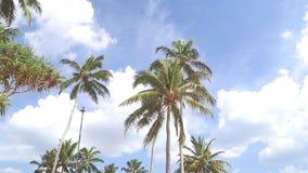Himmelansicht von Palmen im hellen Wind und in den Wolken, die vorbei überschreiten stock footage