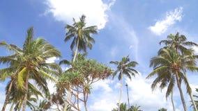 Himmelansicht von Palmen im hellen Wind und in den Wolken, die vorbei überschreiten stock video