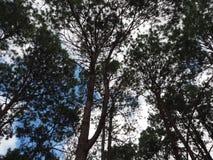 Himmelbaum Stockbild