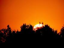Himmelbaum-Hintergrundfeiertage des Sonnenaufganglandes orange Lizenzfreie Stockfotografie