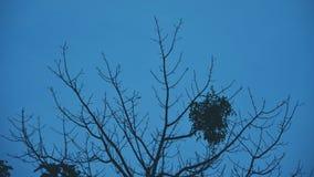 Himmelblau Stockbild