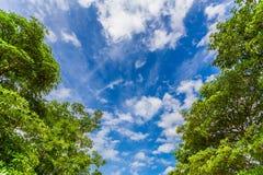 Himmelblau und -baum mit Wolken Lizenzfreies Stockfoto