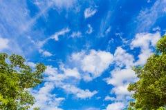 Himmelblau und -baum mit Wolken Stockfotos
