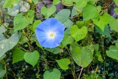 Himmelblau, Winde, wunderbar Blau Lizenzfreies Stockbild