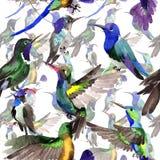 Himmelfågelcolibri i ett djurliv vid vattenfärgstilmodellen vektor illustrationer