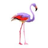Himmelfågelflamingo i ett isolerat djurliv vid vektorstil stock illustrationer