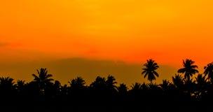 Himmelgryning och kokospalm Arkivbilder