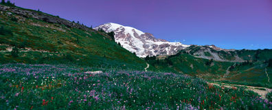 Himmelhinterpanoramaansicht in Mt Rainier National Park Stockbild
