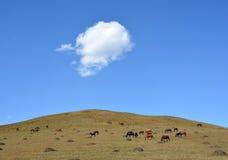 Himmelmolnet betar hästar Royaltyfri Foto