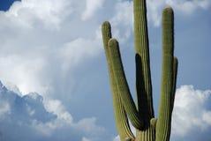 himmelsaguaro arkivfoto