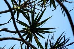 Himmelsikt från ett exotiskt trädtak arkivfoton