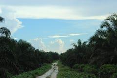 Himmelsikt och synliga palmträd omkring arkivfoton