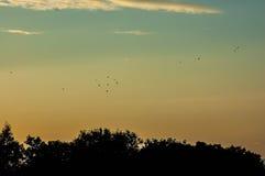 himmelsolnedgången med fågeln kommer tillbaka royaltyfria foton