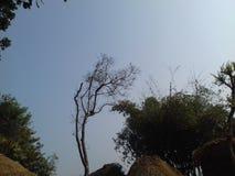 Himmelträd fotografering för bildbyråer