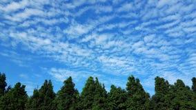 Himmelträd i morgonen Arkivfoto