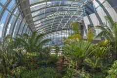 Himmelträdgården, gata för 20 Fenchurch, London, UK Royaltyfri Bild