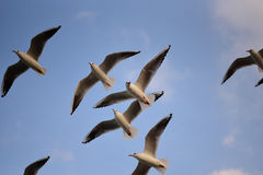Himmelvingar Arkivfoton