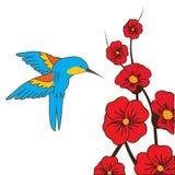 Himmingbird Ilustração do Vetor