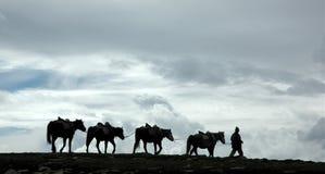 himmlar till långt Fotografering för Bildbyråer