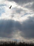 Himmlische Strahlen Stockfotos
