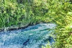 Hinatuan tjusade floden royaltyfri fotografi