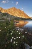 Hincovo pleso jezioro Fotografia Stock