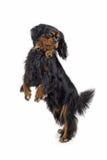 hind ben för hund Arkivfoton