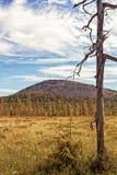Hinder i det finlandssvenska Laplandet Arkivbild