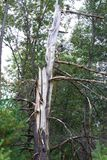 Hinderträd i Wisconsin arkivfoto
