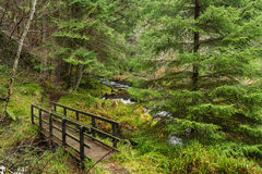 Hindhope Linn walking trail Royalty Free Stock Photography