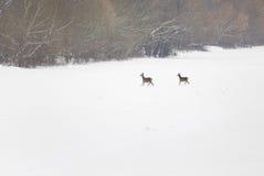 Hinds op sneeuw Royalty-vrije Stock Afbeelding