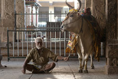Madurai, India, Hindu Man with Holy Cow at the Meenakshi Temple Stock Photography