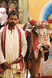 Hindu priest with holy cow Royalty Free Stock Photo